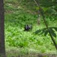 小鳥峠のクマちゃん